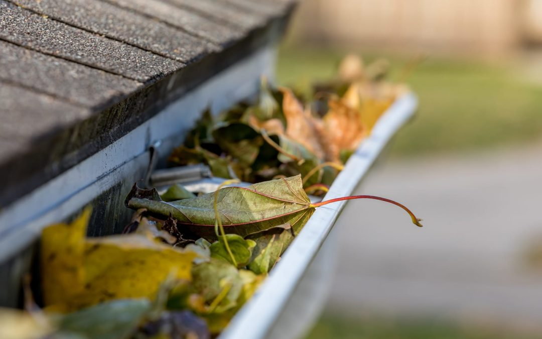 Clean Out Your Gutters Right Now