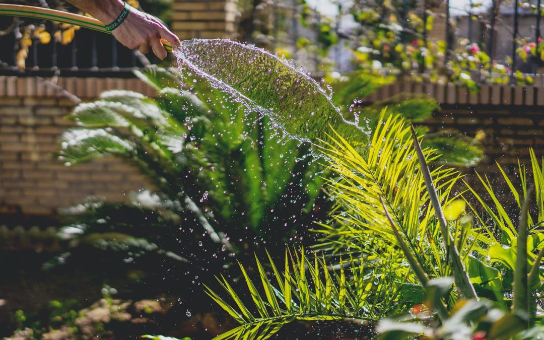 Learning how to adjust a water heater in the summer can make the difference for you and your plants from getting scorched.